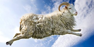 how-to-fall-alseep-fast-counting-sheep
